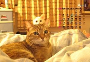 【月曆系列】客製化照片三角桌曆(簡單設計)